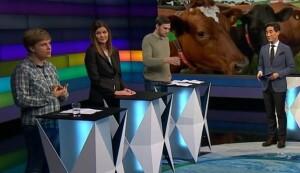 debatten dyr - passe3